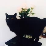 2016-08-02 Fuzzy Boots Update5