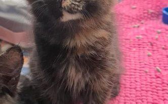 ivy the cat